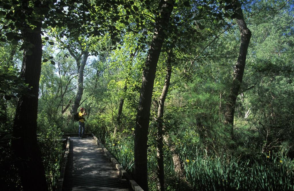 Reserva natural de Sebes, la Ribera d'Ebre, Terres de l'Ebre, Tarragona