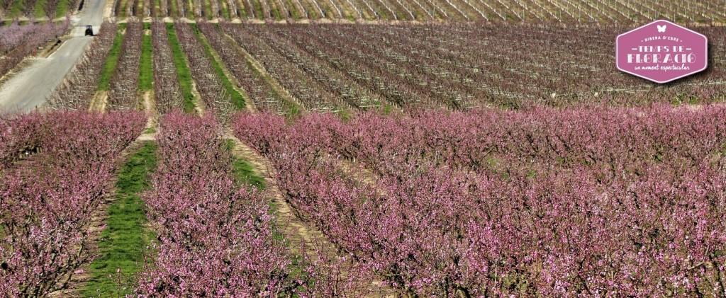 floració ribera ebre primavera floridaweb